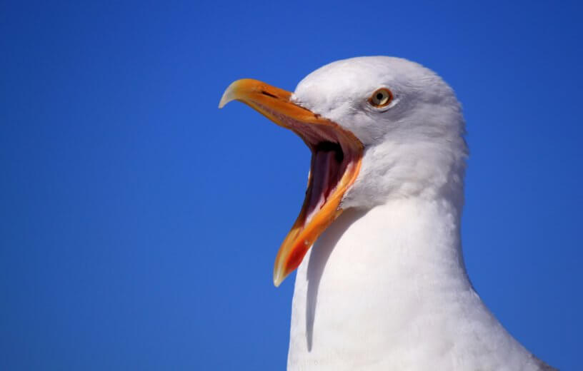 A warning to Podiatrists: don't become a bossy Seagull.